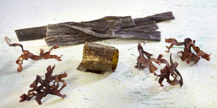 Usos y propiedades del alga alaria