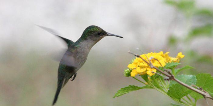 ¿Cómo nos afecta la primavera física y emocionalmente?