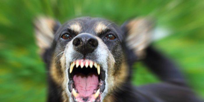 Psicofármacos y agresividad en animales