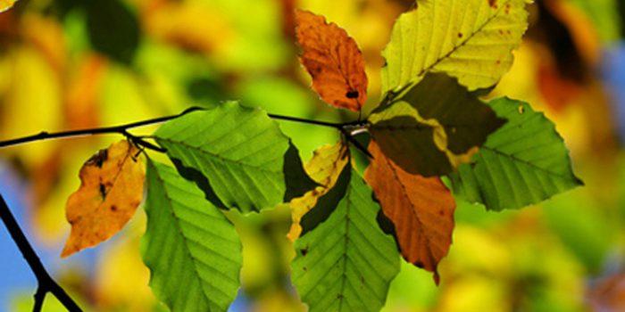¿Cómo funciona el azufre como fungicida?