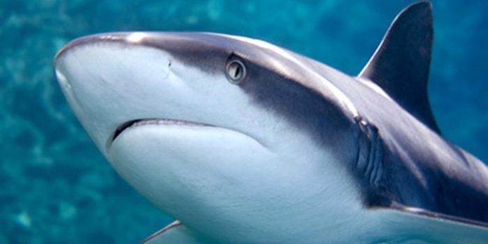 Cartílago de tiburón para el cáncer y el dolor