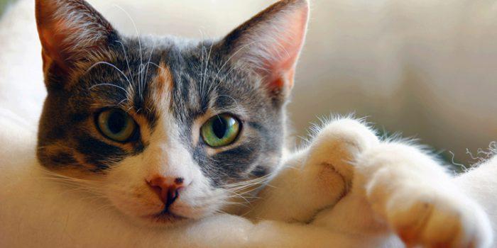 Conoce mejor el comportamiento de los gatos
