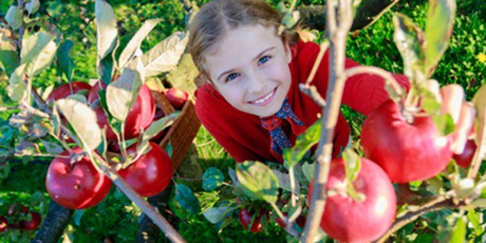 Beneficios del huerto escolar ecológico