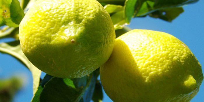 Cómo incorporar el limón para adelgazar