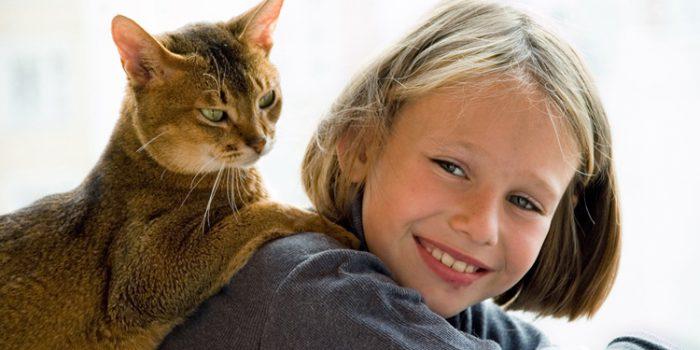 Inconvenientes del pienso para gatos