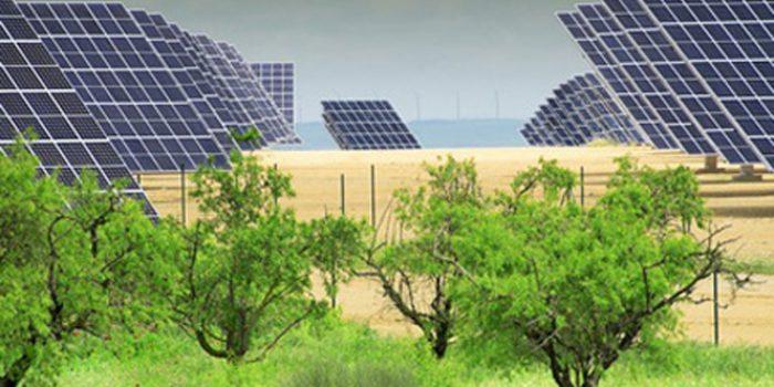 El precio del petróleo y el desarrollo sostenible