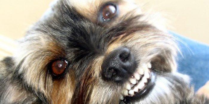 Como evitar los ladridos del perro