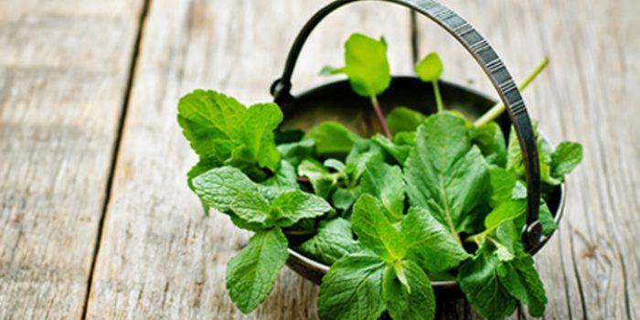 Beneficios y funciones de la Luteolina