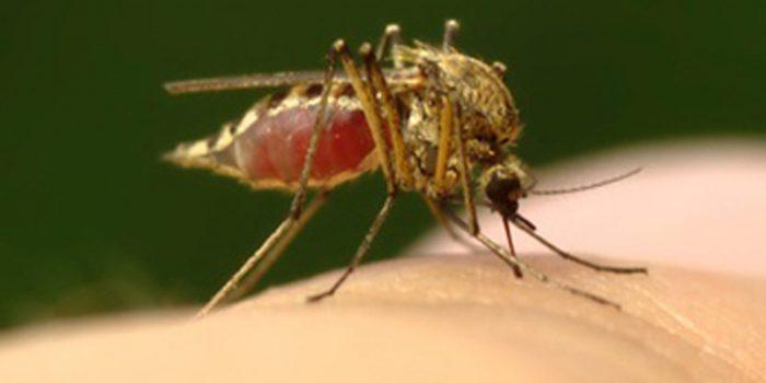 Síntomas de la malaria o paludismo