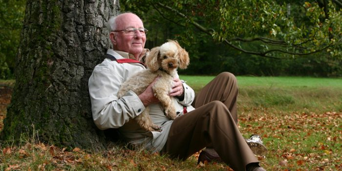 Beneficios de la terapía con perros