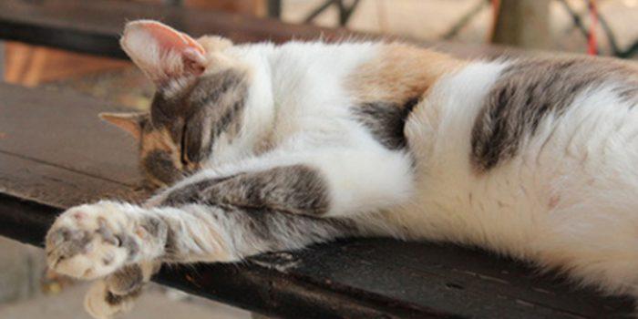 Causas del cansancio extremo y como superarlo