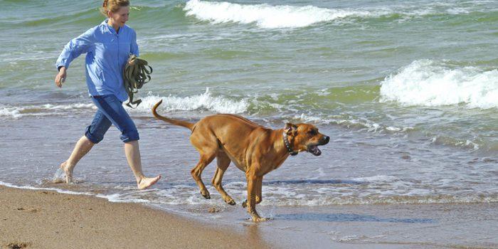 Beneficios del agua de mar para mascotas