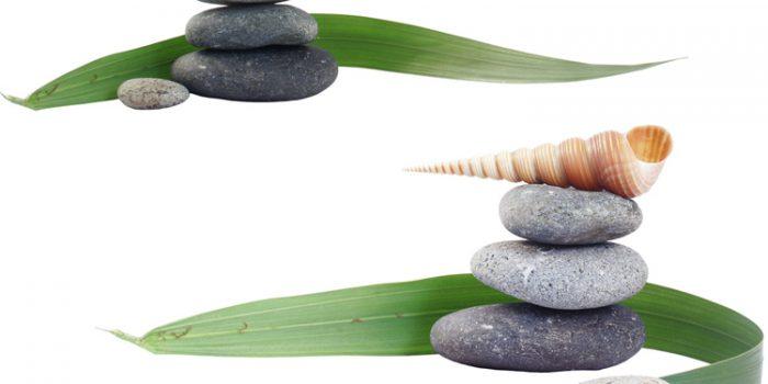 Slender Rice Flower - Pimelea Linifolia