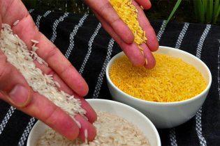arroz-dorado