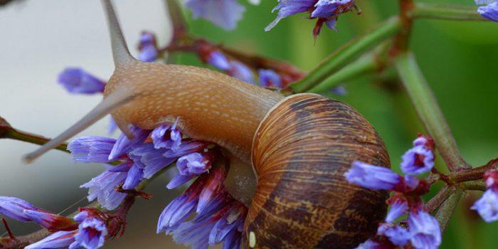 Beneficios de la crema de baba de caracol