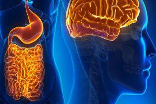 intestino-cerebro