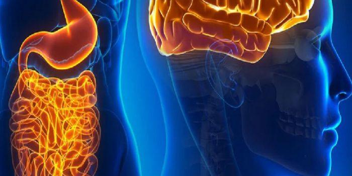 Eje intestino cerebro, ¿cómo se comunican y relacionan?