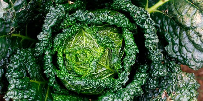 Propiedades del kale, algunas interesantes recetas