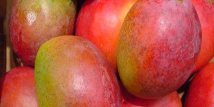 Conece las propiedades del mango africano