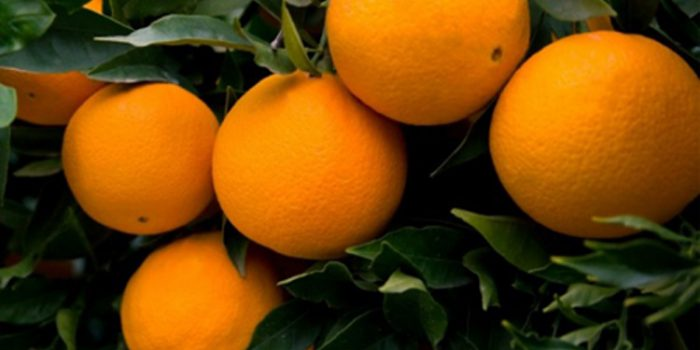 Propiedades de la Naranja Dulce