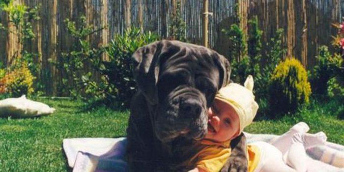 Bebés y perros en casa sin problemas