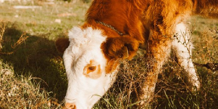 Proteína de suero de leche, qué es y qué tipos que existen