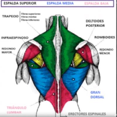 Aumentar la masa muscular en la espalda: Selección de los ...