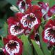 Orquídea Protección